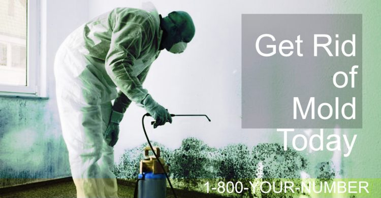 Mold Removal In Round Rock, TX – Mold Remediation Services